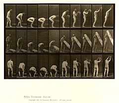 Animal locomotion. Plate 382 (Boston Public Library).jpg