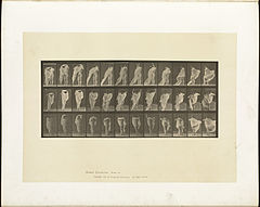 Animal locomotion. Plate 416 (Boston Public Library).jpg