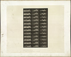 Animal locomotion. Plate 544 (Boston Public Library).jpg