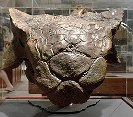 Ankylosaur head - cast - Custer County Montana - Museum of the Rockies - 2013-07-08.jpg