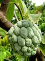 Annona squamosa (Pomme cannelle).jpg