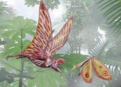 Anurognatus ammoni chassant un Kalligramma  haeckeli