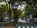 Aoba-Dori Ave 2007 a.JPG