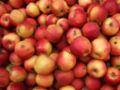 Apfel gala.JPG