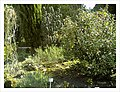 April Botanischer Garten Freiburg - Master Botany Photography 2013 - panoramio (6).jpg