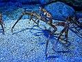 Aquarium 3.jpg