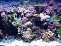 Aquarium Genoa 67.JPG