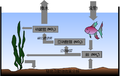 Aquarium Nitrogen Cycle(zh).png