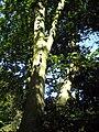 Arboretum, Kórnik 2010 (9).jpg