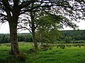 Archerbeck Wood - geograph.org.uk - 838564.jpg