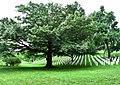 Arlington National Cemetery 5.jpg