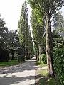 Assistens Kirkegård - Poplars.jpg