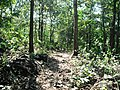 Asurankundu Forest - panoramio (1).jpg