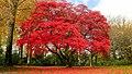 Autumn At Stourhead (10900307836).jpg