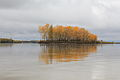 Autumn in Bystroistokskiy district on Ob river in end of september.jpg