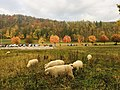 Autumn of Swiss.jpg