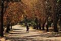 Autumn postman.jpg