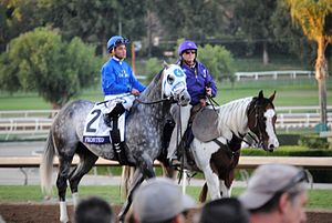 Frosted (horse) - Frosted at the 2016 Breeders' Cup Classic
