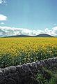 BIN OF CULLEN - Cullen, Scotland - May 11, 1989 - panoramio.jpg