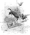 Baccini - Memorie di un pulcino, Bemporad & Figlio, Firenze, 1918 (page 181 crop).jpg