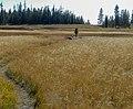 Backpacking through Bechler meadows (a73cea60-811a-416e-b969-cc1e43d4503c).jpg
