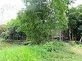 Backyard of Nawab Faizunnesa House at Laksham, Comilla, 19 April 2017 2.jpg