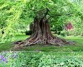 Bailey arboretum tree.jpg