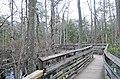 Bald Cypress Trail First Landing State Park-boardwalk-3 (33208548045).jpg