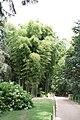 Bambouseraie de Prafrance 20100904 040.jpg