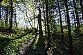 Bannwald Untereck, Baden-Württemberg (2019).jpg