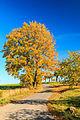 Barvy podzimu u Rovného.jpg