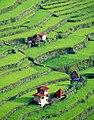 Batad, Banaue Rice Terraces with Homes Cira 2000.jpg