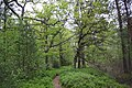 Beautiful path with blueberry growing thick all around.jpg