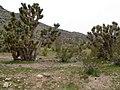Beaver Dam Mountains, Between St. George, Utah and Mesquite, Nevada (71863297).jpg