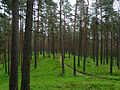 Beberbeku nature park.jpg