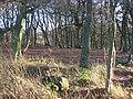 Beechwood on the edge of Gardrum Moss. - geograph.org.uk - 85274.jpg