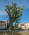 Beelitz asv2021-06 img13.jpg