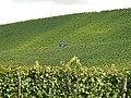 Beim 366 km langen Neckartalradweg, Vollernter in den Weinbergen bei Neckarwestheim - panoramio.jpg