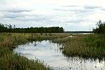 Belarus-Drobnia river.jpg