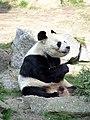 Berlin panda 1.jpg
