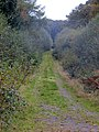 Berrydown Woods - track - October 2014 - panoramio.jpg