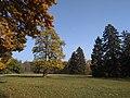Big Glade (Alexandria Dendropark).jpg