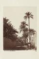 Bild från familjen von Hallwyls resa genom Algeriet och Tunisien, 1889-1890 - Hallwylska museet - 91940.tif