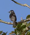 Bird1a (5489561804).jpg