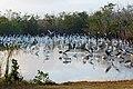 Birding, Mrazek Pond, NPSPhoto (cropped).jpg