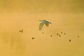 Birds at dawn at lake Taudaha and the fog illuminated by the sunlight.jpg