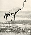 Birds of other lands, reptiles, fishes, jointed animals and lower forms; (1917) (14748925465).jpg