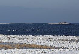 Blick Richtung Osten auf den Karrendorfer Wiesen im Naturschutzgebiet Insel Koos, Kooser See und Wampener Riff.JPG