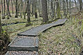 Boardwalk Holme Wood - geograph.org.uk - 1144869.jpg