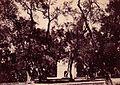 Bois sacré à Blida en 1856.jpg